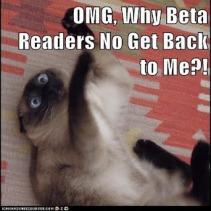 beta-readers-cat